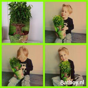 sprookjesboom, efteling, plant, verjaardag, batboy, cadeau