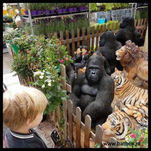 gorilla, batboy, tuincentrum oosterik, dierentuin, uitstapje, dieren, aap