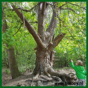 sprookjesboom, bos, batboy, rennen, ravotten, spelen, kinderen