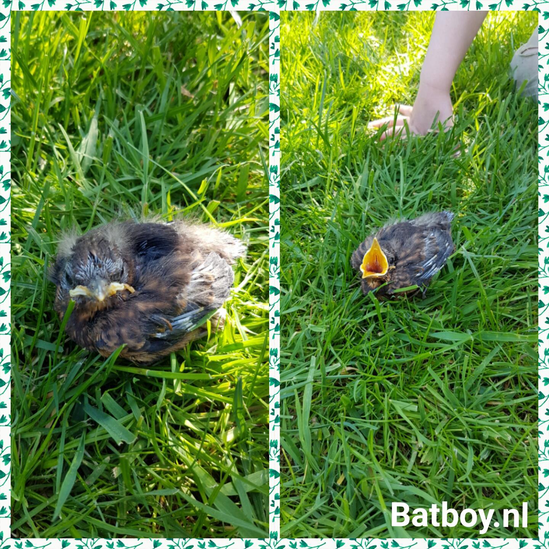 batboy, mamablog, vogeltje gevonden