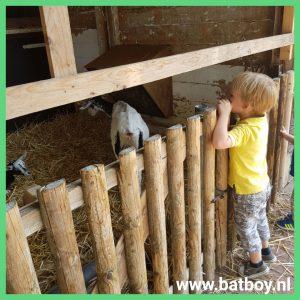 geiten, kinderboerderij, weusthag, hengelo