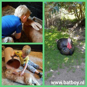 kinderboerderij, mamablog, batboy