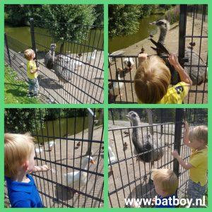 emoe, batboy, weusthag, hengelo, kinderboerderij, weusthagpark, kinderboerderij weusthag