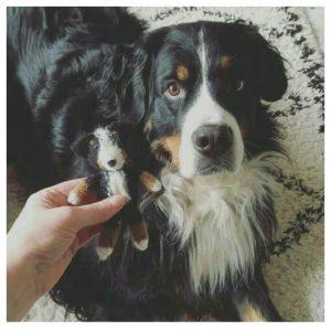 stuffy. props, stuffies, newborn, fotografie, batboy, hond