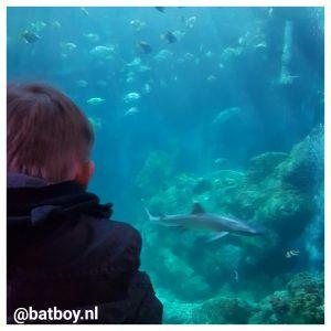 schildpad, sea life, sea life oberhausen, batboy, kinderen