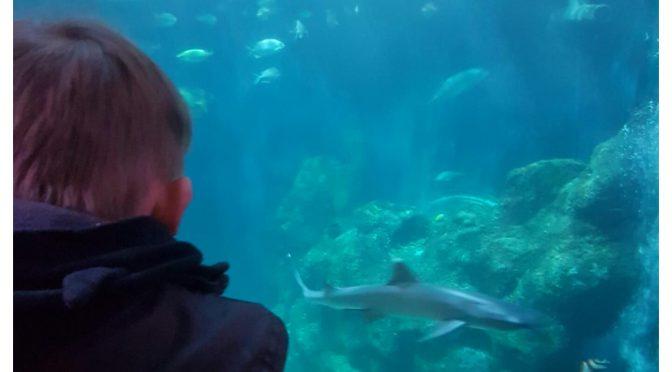 Sea Life Oberhausen