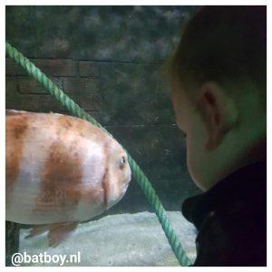vissen, batboy, sea life, sea life oberhausen, oberhausen, kinderen
