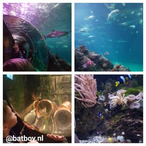 sea life, sea life oberhausen, oberhausen, batboy, vis, vissen, kinderen