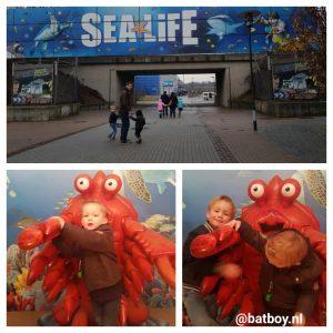 sea life, sea life oberhausen, oberhausen, vissen, batboy, piraat, krab