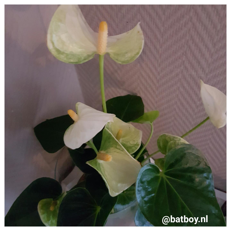 hydroponie, planten