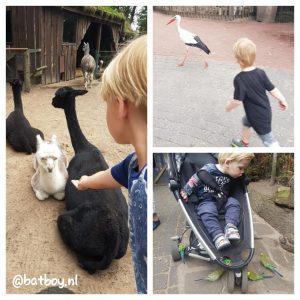 batboy, tierpark nordhorn, dieren voeren