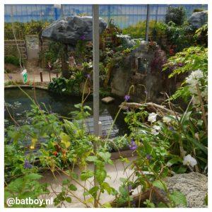 mamablog, batboy, de vlindertuin, emsflower