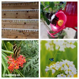 de vlindertuin, emsflower, mamablog, batboy