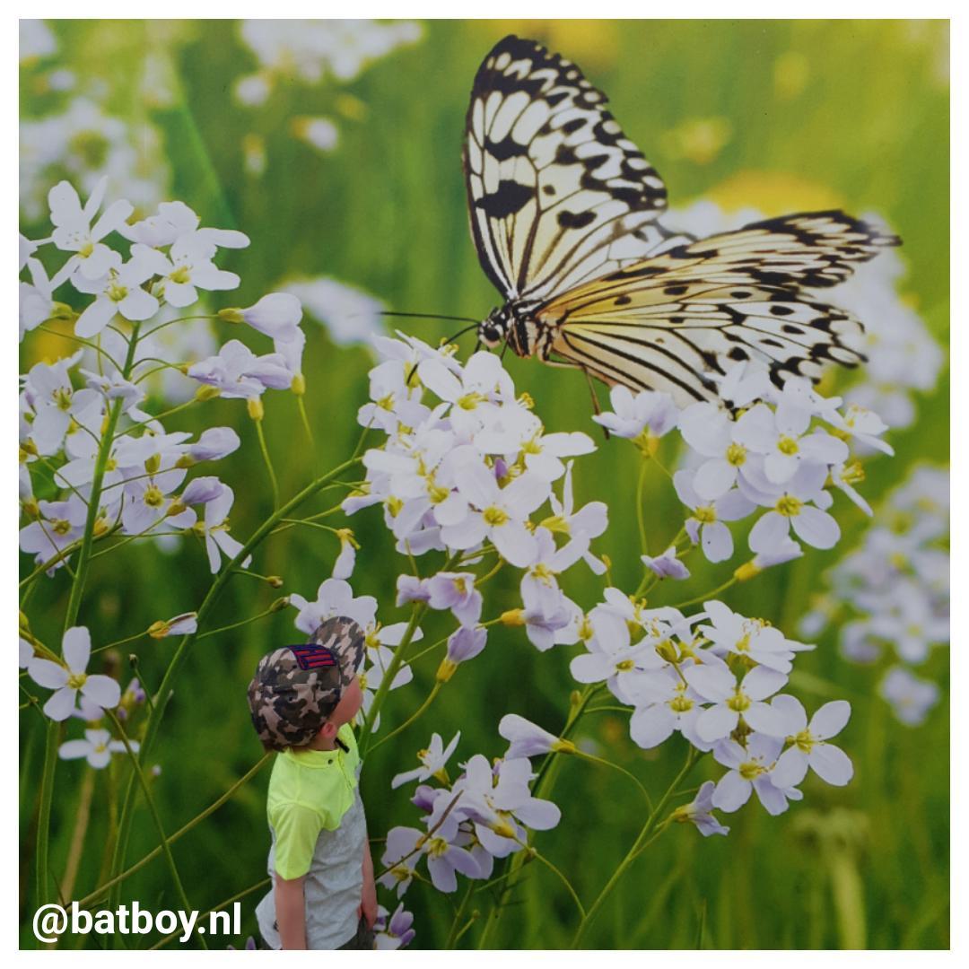 batboy, mamablog, emsflower, vlindertuin emsburen
