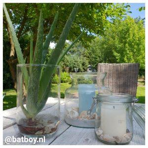 makkelijke kamerplanten, kamerplanten, mamablog, batboy
