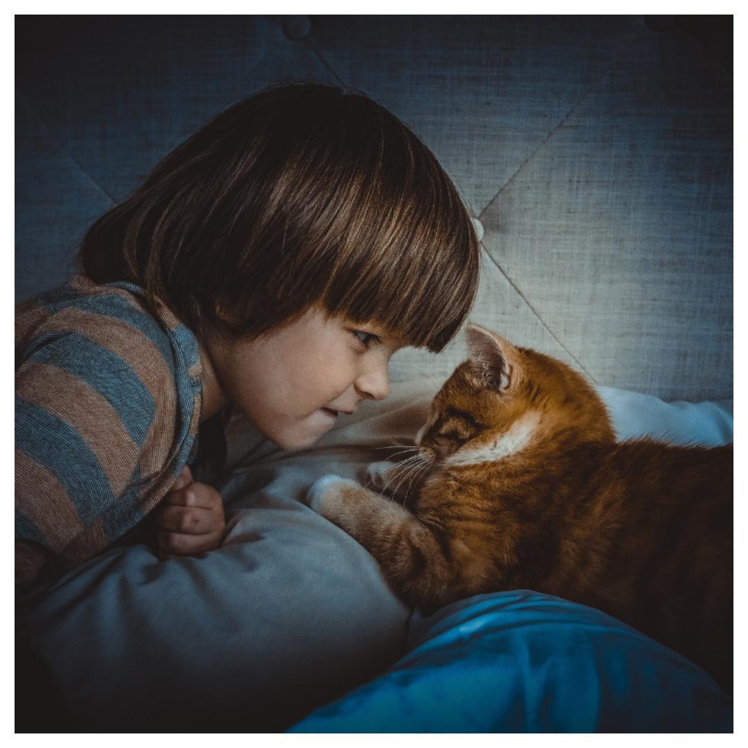 poes, huisdier, katten