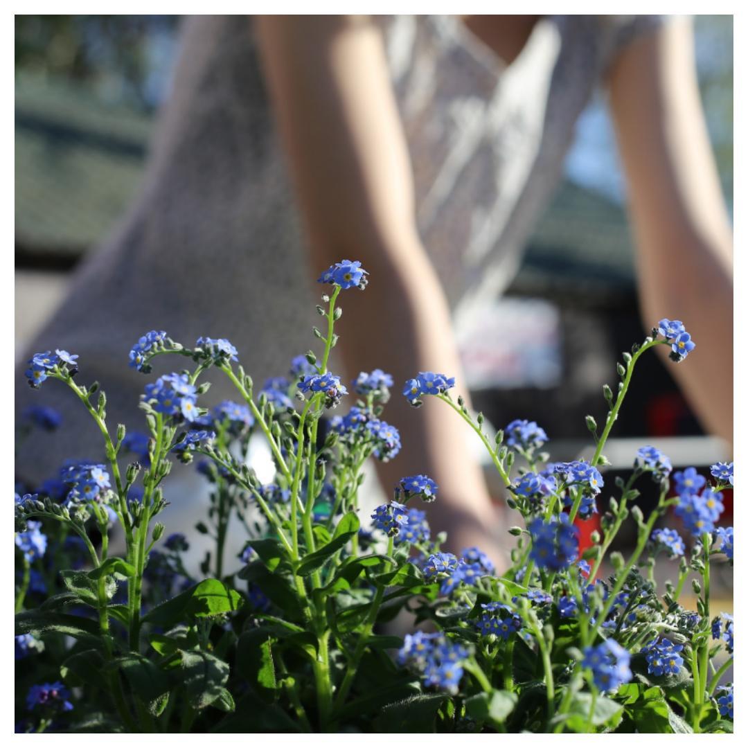 tuin, zomer