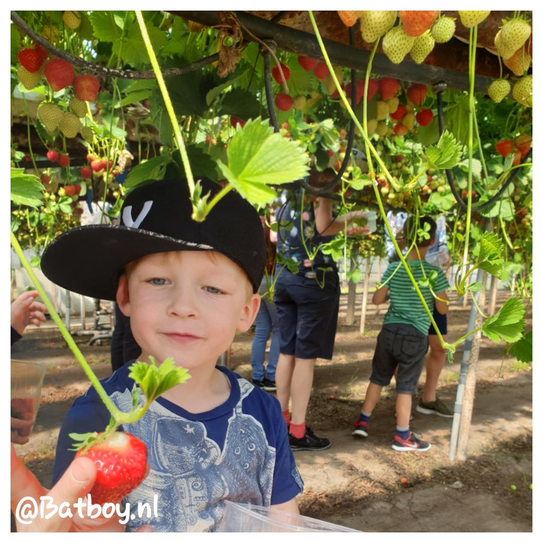 Doen met je kids: aardbeien plukken