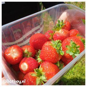 fruit, plukken, eten gezond