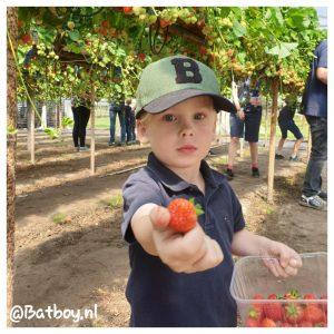 fruitkweker, fruit, manderveense