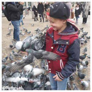 duiven, amsterdam, duiven voeren