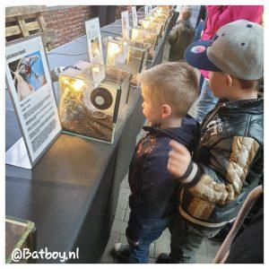 vogelspin, tentoonstelling