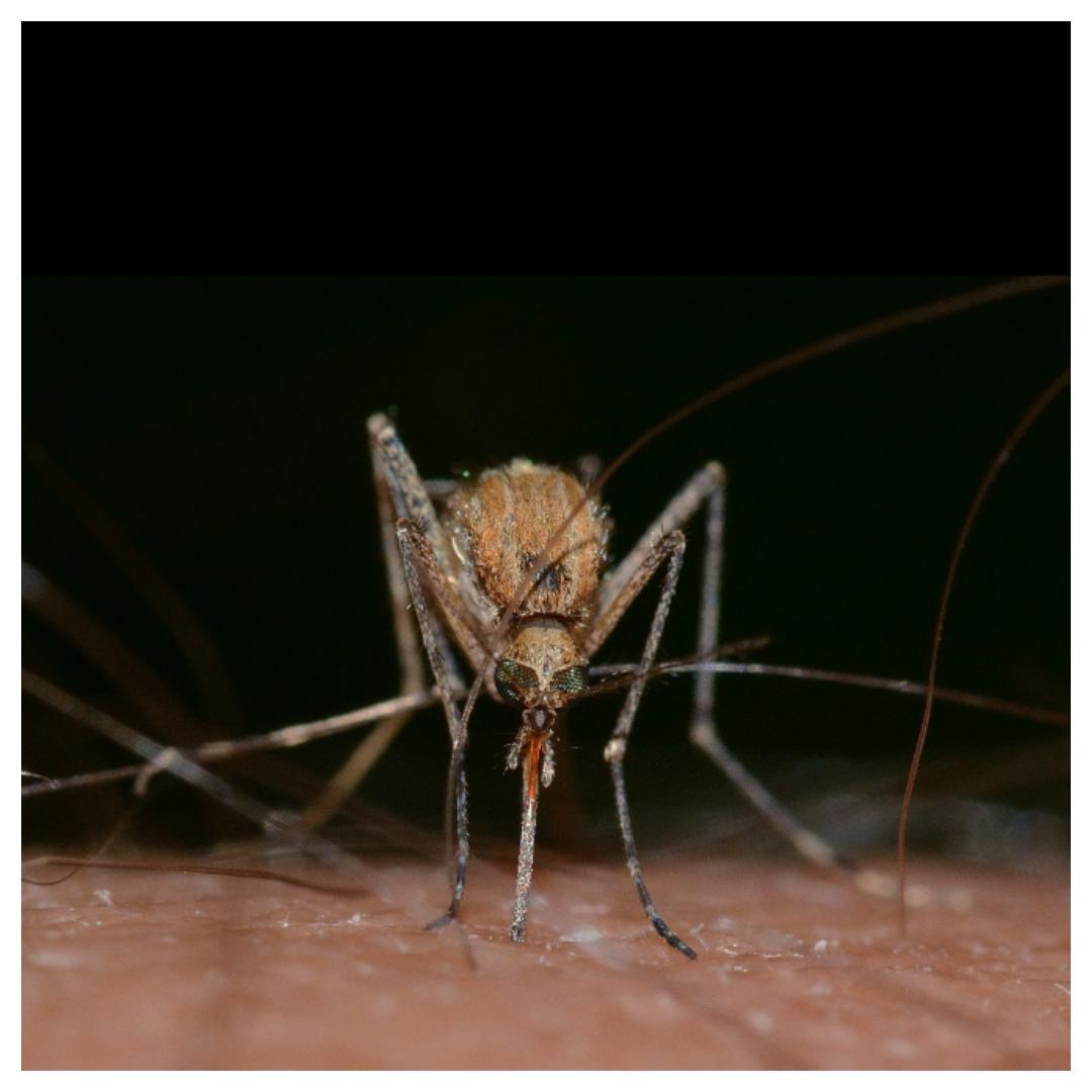 muggen, afstand